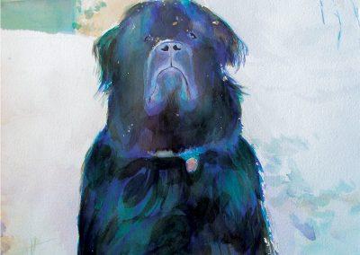 Pet Tibetan Mastiff